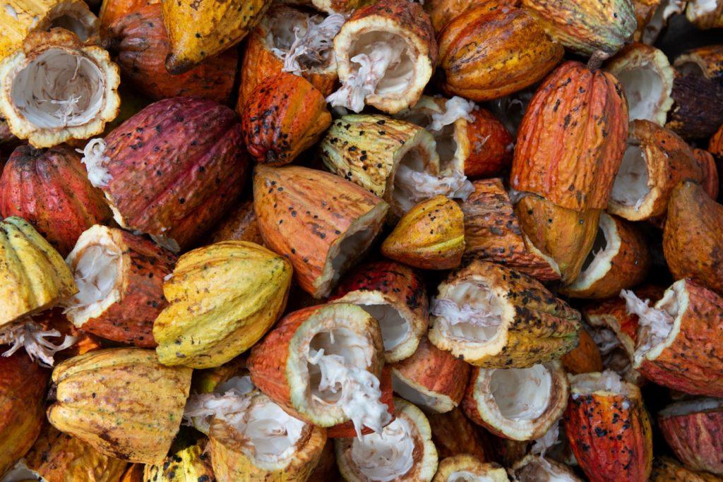Fructe de cacao